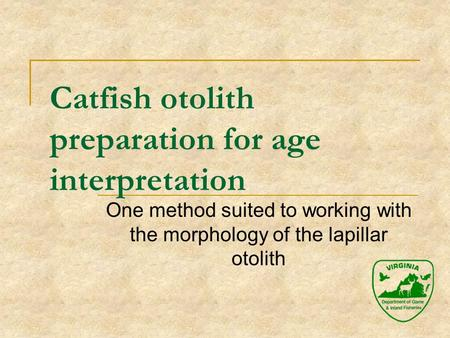Catfish otolith preparation for age interpretation One method suited to working with the morphology of the lapillar otolith.