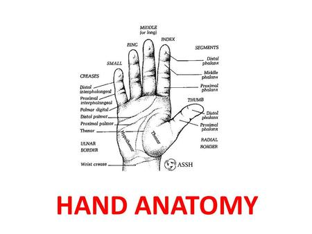 HAND ANATOMY. Some Lovers Try Positions That They Can't Handle Scaphoid, Lunate, Triquetrum, Pisiform Trapezium, Trapezoid, Capitate, Hamate.