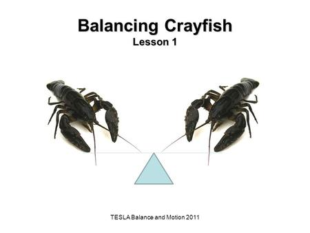 Balancing Crayfish Lesson 1