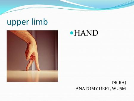 Upper limb HAND DR.RAJ ANATOMY DEPT, WUSM. HAND The hand is the region of the upper limb distal to the wrist joint. It is subdivided into three parts: