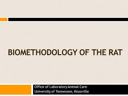 BIOMETHODOLOGY OF THE RAT Office of Laboratory Animal Care University of Tennessee, Knoxville.