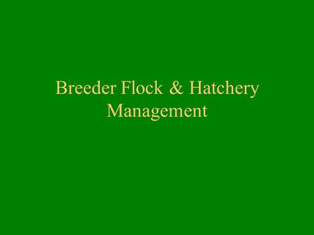 Breeder Flock & Hatchery Management. Breeder Flock Management Breeder Selection –Conformation –Color –Size –Health –Turkeys, ducks and geese selected.