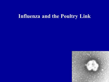 Influenza and the Poultry Link. Hemagglutinin Neuraminidase.
