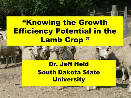 """Knowing the Growth Efficiency Potential in the Lamb Crop "" Dr. Jeff Held South Dakota State University."