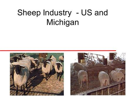 Sheep Industry - US and Michigan. Fall 2002 Michigan Sheep Production u Purebred production –Greatest proportion of the industry –Produce and sell seedstock.