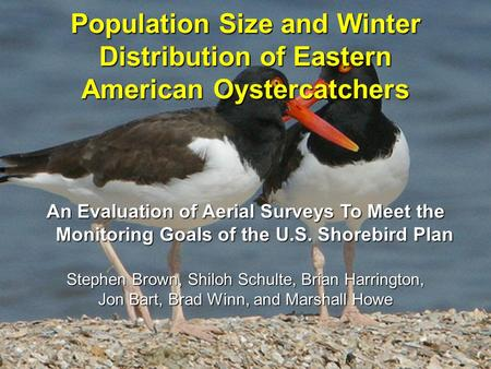 Population Size and Winter Distribution of Eastern American Oystercatchers An Evaluation of Aerial Surveys To Meet the Monitoring Goals of the U.S. Shorebird.
