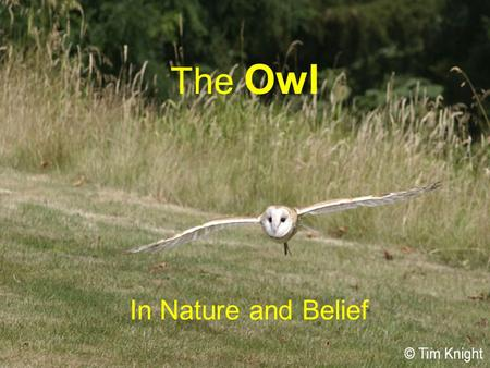 The Owl In Nature and Belief. The Owl  Owls are a group of mainly nocturnal birds  Owls are raptors or birds of prey  They hunt for their food  Belong.
