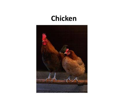 Chicken. Chickens are omnivores. In the wild, they often scratch at the soil to search for seeds, insects and even larger animals such as lizards or young.
