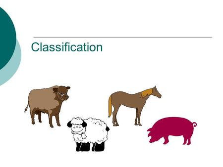 Classification. Classification  GROUPING things according to their CHARACTERISTICS.