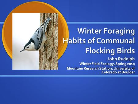 Winter Foraging Habits of Communal Flocking Birds John Rudolph Winter Field Ecology, Spring 2010 Mountain Research Station, University of Colorado at Boulder.