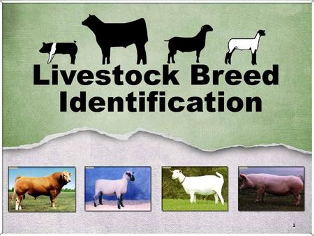 1. 2 3 Information: – Developed on Island of Barbados Unknown origin – Distinguishing Characteristics Parasite resistance Heat tolerance – Breed Character.
