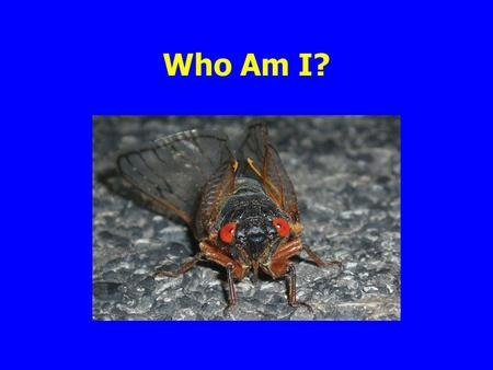 Who Am I?. Insects Phylum Arthropoda (means jointed foot) Class Insecta includes all the true insects Class Arachnida spiders, mites, ticks.