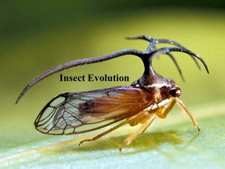 Insect Evolution.