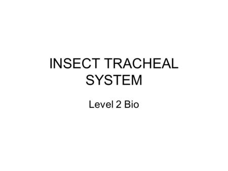 INSECT TRACHEAL SYSTEM Level 2 Bio. INSECT TRACHEAL SYSTEM This is completely different to humans The insect's gas exchange system is completely separate.