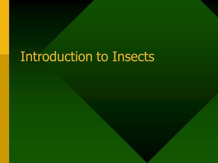 Introduction to Insects. The Study of Insects Known as entomology Entomologists have described and classified more than 900,000 insect species. Entomologists.