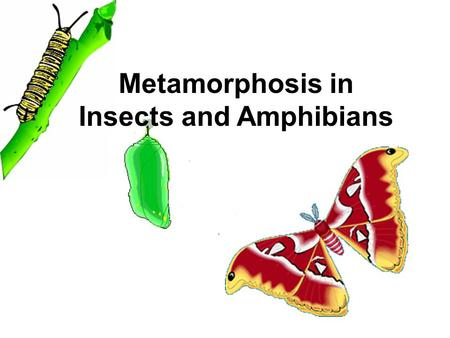 Metamorphosis in Insects and Amphibians