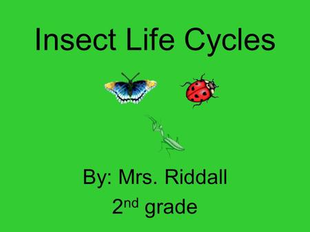 Insect Life Cycles By: Mrs. Riddall 2 nd grade. Ladybugs Four life cycle stages: Egg Larvae Pupa Adult Habitat: grass, plants Diet: aphids, plants, mealy.