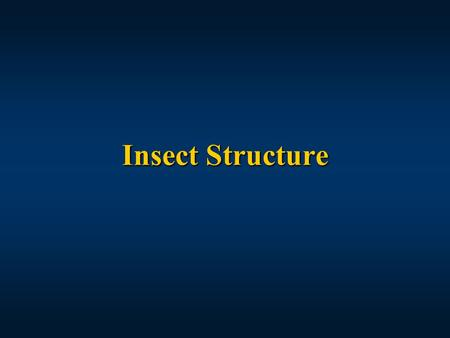 Insect Structure.