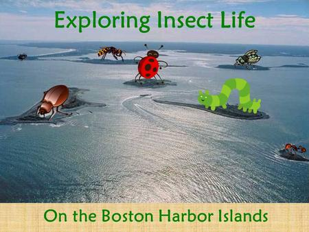 Exploring Insect Life On the Boston Harbor Islands.