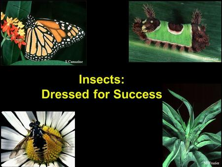 S.Camazine MTFrazier Insects: Dressed for Success.