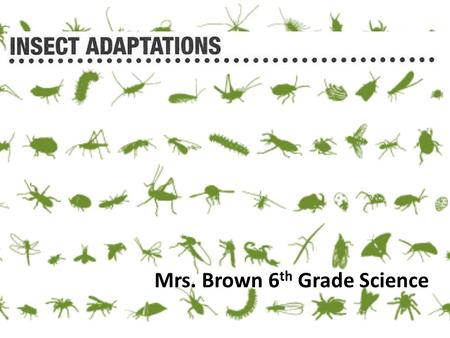 Mrs. Brown 6 th Grade Science. Click the purple image at the bottom to watch a 17 minute web- instruction on insects. You will need to select next at.