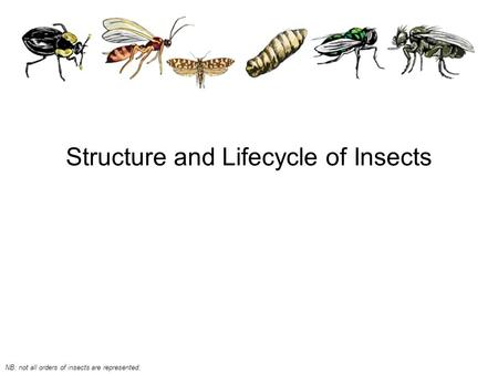 Structure and Lifecycle of Insects NB: not all orders of insects are represented.