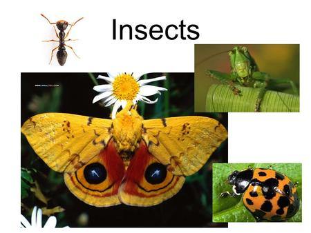 Insects.