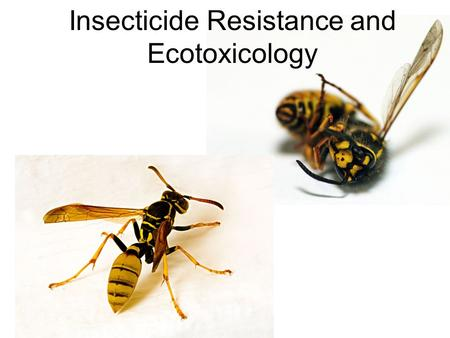 Insecticide Resistance and Ecotoxicology. Insecticide Composition Insecticide = Active Ingredient + Additives.