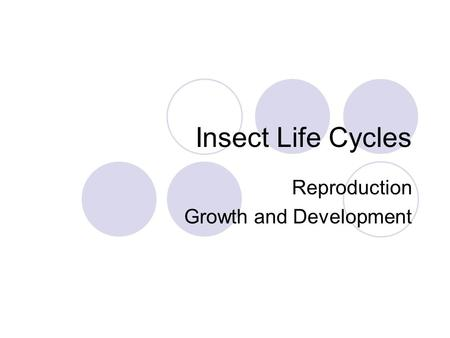Insect Life Cycles Reproduction Growth and Development.