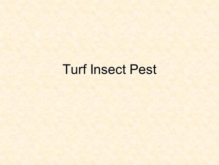 Turf Insect Pest. Introduction Turfgrass value: functional, aesthetic, and economic All values adversely affected by pest Over 300 million acres of turf.