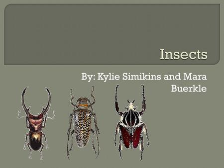 By: Kylie Simikins and Mara Buerkle.  Insects are all over but there are many misunderstandings of what an insect is.  This presentation will teach.