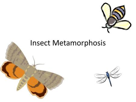 Insect Metamorphosis. INCOMPLETE Metamorphosis Has THREE stages COMPLETE Metamorphosis Has FOUR stages.