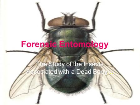 Forensic Entomology. Why Are Insects Used in Forensic Science? In most seasons and environments, insects colonize a dead body almost immediately after.