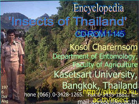 Kosol Charernsom Department of Entomology, Faculty of Agriculture Kasetsart University, Bangkok, Thailand Phone (066) 0-3428-1265. Fax 0-3435-1881. E-