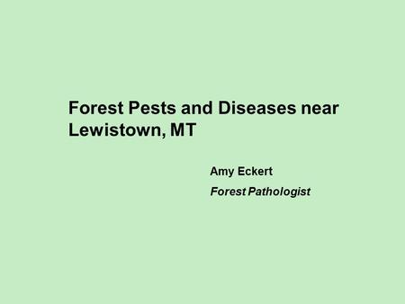 Forest Pests and Diseases near Lewistown, MT Amy Eckert Forest Pathologist.