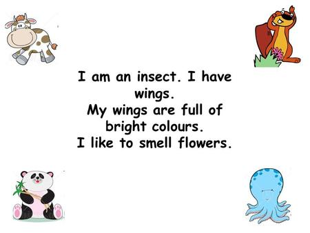 I am an insect. I have wings. My wings are full of bright colours. I like to smell flowers.