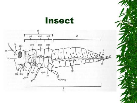 Insect. Insect Body Parts  ab - abdomen  an - antenna  cpe – compound eye  cr – circus  epm – epimeron  eps – episternum  hd – head  la – labium.