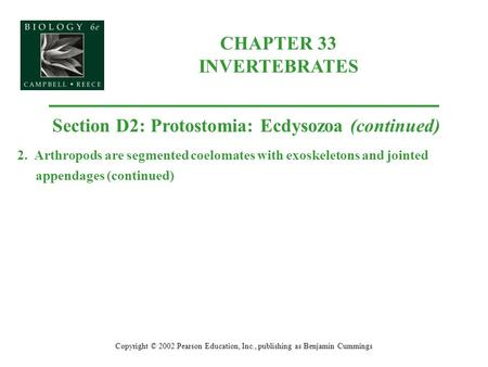 CHAPTER 33 INVERTEBRATES Copyright © 2002 Pearson Education, Inc., publishing as Benjamin Cummings Section D2: Protostomia: Ecdysozoa (continued) 2. Arthropods.