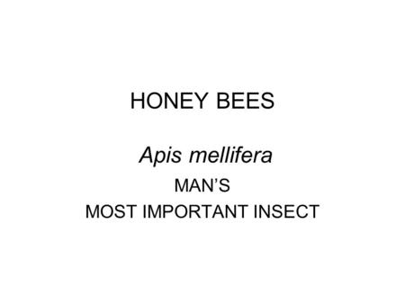 HONEY BEES Apis mellifera MAN'S MOST IMPORTANT INSECT.