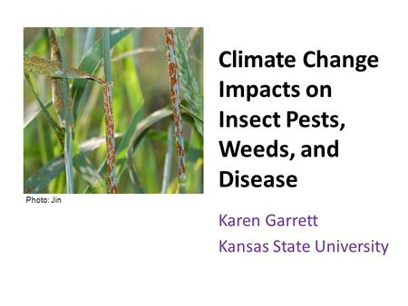 Climate Change Impacts on Insect Pests, Weeds, and Disease Karen Garrett Kansas State University Photo: Jin.