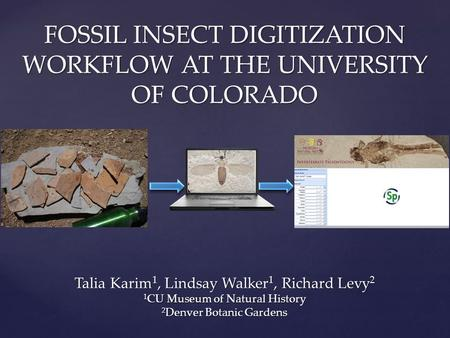FOSSIL INSECT DIGITIZATION WORKFLOW AT THE UNIVERSITY OF COLORADO Talia Karim 1, Lindsay Walker 1, Richard Levy 2 1 CU Museum of Natural History 2 Denver.