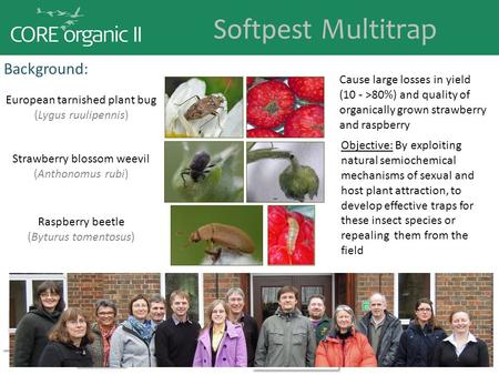 Softpest Multitrap Background: Cause large losses in yield (10 - >80%) and quality of organically grown strawberry and raspberry European tarnished plant.