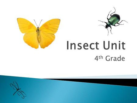 4 th Grade.  Insects are _________________ ◦ Arthropods have _________________ made of _________. ◦ Arthropods have _________________________ (legs).