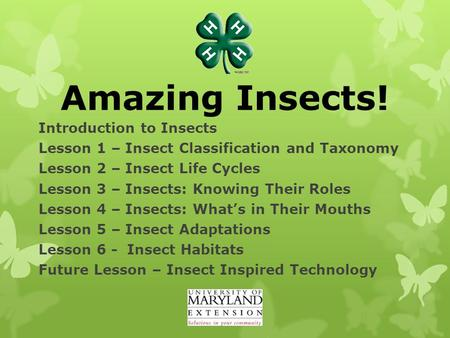 Amazing Insects! Introduction to Insects Lesson 1 – Insect Classification and Taxonomy Lesson 2 – Insect Life Cycles Lesson 3 – Insects: Knowing Their.