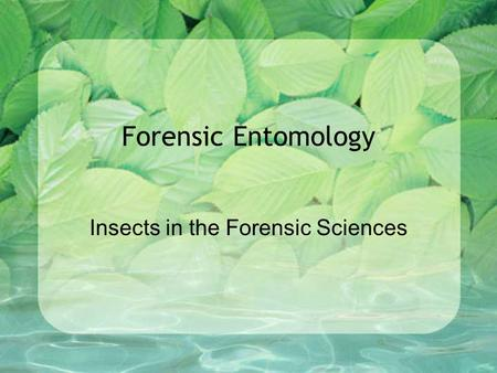 Insects in the Forensic Sciences