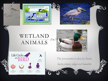 WETLAND ANIMALS This presentation is done by: Imshi, kosta, jianne, salgai and hawaikii.
