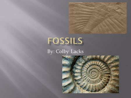 By: Colby Lacks.  Without such fossils, scientists would know very little about the history of life on earth.  The answers we get from rocks often cause.