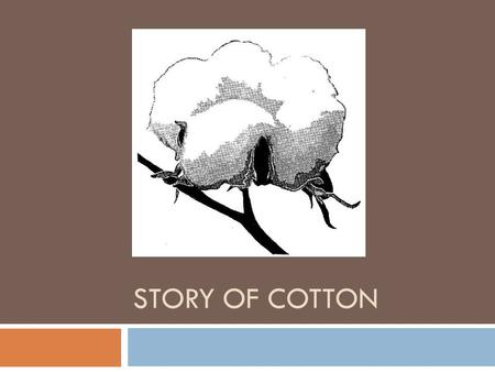 Story of cotton.