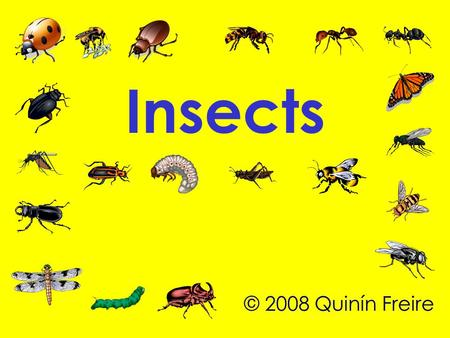 Insects © 2008 Quinín Freire. There are more than1,000,000 species of insects in Nature.