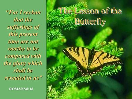 "The Lesson of the Butterfly ""For I reckon that the sufferings of this present time are not worthy to be compared with the glory which shall be revealed."